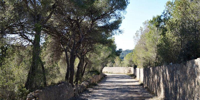 camino-can-pei-santa-barbara-6ED38ACB1-F474-54D7-0782-3A4318FAF85A.jpg
